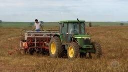 Produtores do Oeste Paulista começaram o plantio de algodão na região