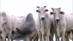 Produtor tem prejuízo de R$ 200 mil após furto de gado; veja os outros destaques da semana