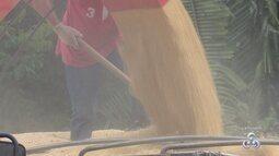Produção de grãos em Rondônia deve ser maior que 1,5 toneladas em 2017