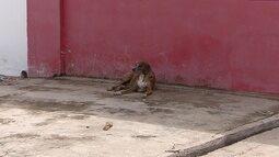 Em reforma, canil municipal restringe captura de cachorros em Macapá