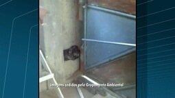 Jiboia é encontrada dentro de residência em Campos dos Goytacazes, no RJ