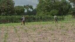 Na Grande Fortaleza, agricultores aguardam chuva para iniciar colheita