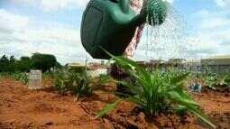 Horta comunitária em Juazeiro do Norte produz alimentos saudáveis e a preços baixos