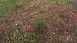 Canteiro com espécies raras do cerrado brasileiro desaparece de parque em Embu das Artes