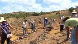 Agroflorestamento ajuda a recuperar terras improdutivas em Sergipe