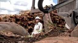 Mulheres que se dedicam à produção de eucalipto e celulosa no leste são homenageadas em MS