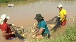 Parte 1: Rondônia se destaca como maior produtor de peixe de água doce do país