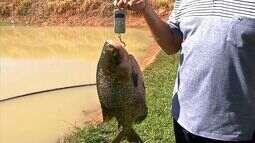 Cresce a produção de pescado durante a quaresma