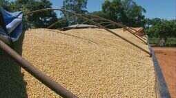 Problemas em balsas fazem produção de soja ficar parada em Delfinópolis (MG)