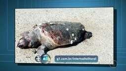 Quatro animais marinhos são encontrados mortos em Quissamã, no RJ