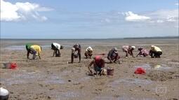 Maré seca sustenta catadoras de mariscos na Baía de Todos-os-Santos
