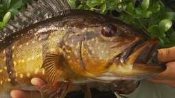 Pescaria na floresta amazônica e a vida dos ribeirinhos.