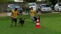 Apaixonados por cães se reúnem em competição em Paulista