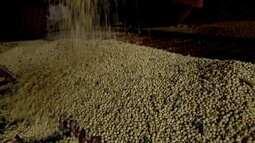 Colheita de soja termina, mas produtores seguram venda e armazéns ficam lotados em MS