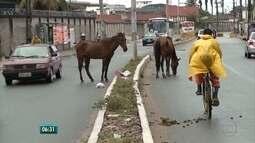 Igarassu começa a multar donos de animais soltos em vias da cidade