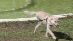 É o Bicho: Cachorro da lição de superação