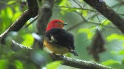 Aves do Parque Nacional do Iguaçu