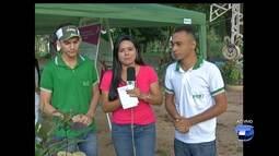 Há 13 anos, projeto trabalha a preservação do melo ambiente em Santarém