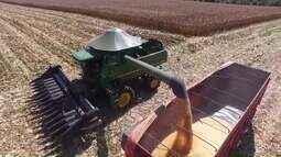 Praga pode afetar resultado da lavoura de milho e sorgo no Triângulo Mineiro