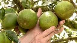Parte 3: Rio Preto da Eva se destaca como maior produtor de laranja do Amazonas