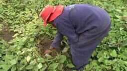 Reeducandos produzem alimentos em horta dentro do sistema prisional, em Maceió