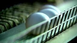 Temperaturas baixas beneficiam produção de ovos em Bastos