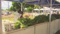 Feira de produtos agrícolas reúne produtores do interior de Macapá