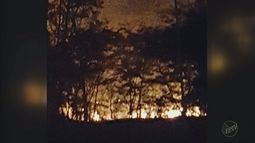 Incêndio destrói mata próxima ao Hospital Santa Teresa em Ribeirão Preto