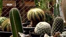 Parte 1: Veja como é feito cultivo de suculentas e cactos