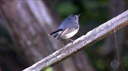 Observação de aves é um tipo de turismo onde cada cidadão pode até ajudar a salvar espécie