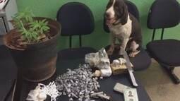 Cão farejador Aquiles leva PM a apreender drogas em favela na zona norte de Ribeirão Preto
