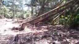 Dema investiga casos de crimes desmatamento em área de preservação no Amapá