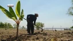 Parte 1: Plantio comunitário beneficia famílias de Iranduba, no Amazonas