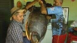 Pescador consegue tambacu de mais de 40 quilos em Miguelópolis, SP