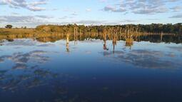 Pirarucu e uma ave rara no Mato Grosso