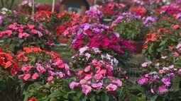 Primavera promete amenizar tempo seco na região