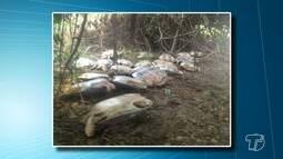 Operação resgata 36 tartarugas-da-Amazônia em lago no interior de Santarém