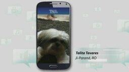 Telespectadora faz postagem no Tô na Rede para encontrar animal de estimação