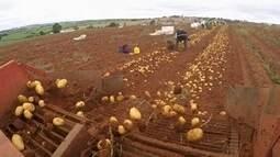 Clima prejudica safra de batata em Capão Bonito