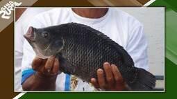 Barra do Choça recebe investimentos para criação de peixes