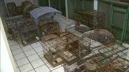 BPA liberta aves que estavam sendo comercializadas em feira livre em Arapiraca
