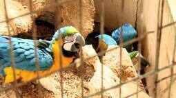 Operação conjunta flagra animais silvestres mantidos em cativeiros em Arapiraca