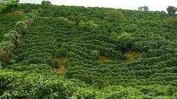 Série apresenta particularidades da produção de café na Costa Rica