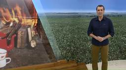 Chuva atrapalha e colheita de feijão é prejudicada no Paraná