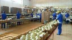RN exporta mais de 160 mil toneladas de melão em 2017