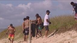 Projeto ajuda na coleta de lixo nas praias de Florianópolis