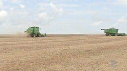 MS deve colher 8 milhões de toneladas de soja nesta safra, apontam Aprosoja e Famasul