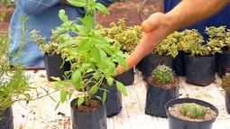 Família investe em cultivo de plantas como cactos, suculentas e temperos