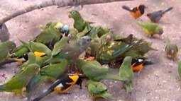 Apesar da queda nas apreensões, tráfico de animais ainda é comum no Norte de Minas