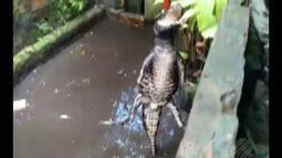 Polícia descobre pequeno zoológico improvisado em casa no 40 Horas em Ananindeua